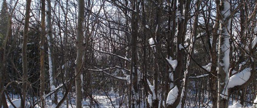 La neige: merveilleux terrain d'entraînement!